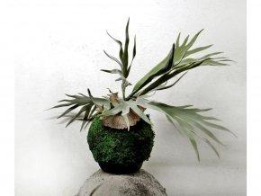 mechová kokedama s umělou květinou - parožnatka