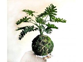 mechová kokedama s umělou květinou - philodendron