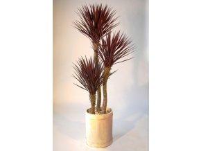 Umělý strom Yucca Linearis Set x3 (200cm) burgundy  juka