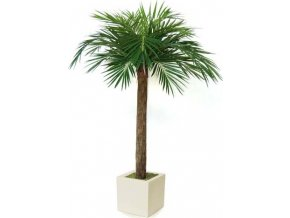 Umělá palma Majesty Palm Tree (Varianta 240cm)
