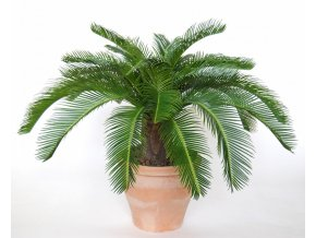 Umělá palma Cycas Baby Country (70cm)