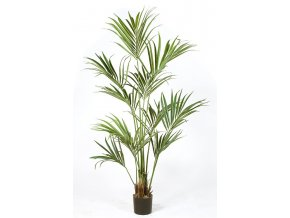 66949 kentia palm