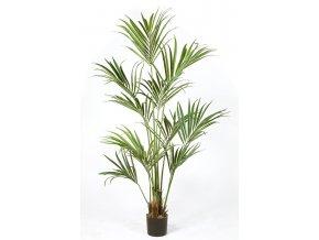 66949 kentia palm