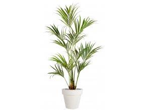 Kentia Palm 180 cm Green V4175GRN