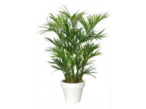 Kentia Palm Lux x3 200 cm Green V4175002