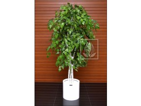 Umělý strom Bříza vícekmenná (Varianta 230cm)
