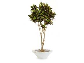 Umělý strom Croton Mash Root (Varianta 250cm)