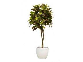 Umělý strom Croton Tree (Varianta 220cm)