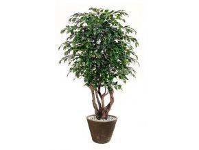 Umělý strom Fikus Exotica Malabar (Varianta 200cm)