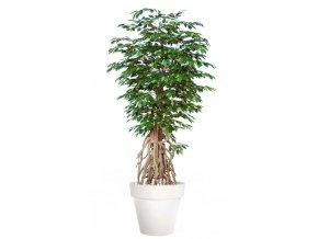 Ficus Exotica Root 260 cm Green V1049046