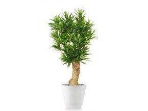 Umělý strom Dracaena Reflexa Drago (120cm) zelená  dracena