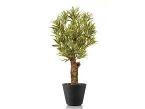 Umělý strom Dracaena Reflexa Drago (120cm) vario  dracena