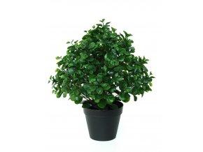 Umělá rostlina Peperomia Plant (60cm)