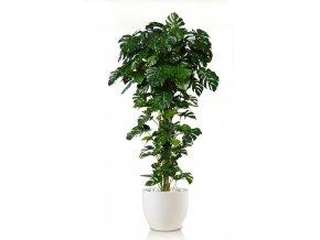 Umělá rostlina Philo Split Climber (250cm)