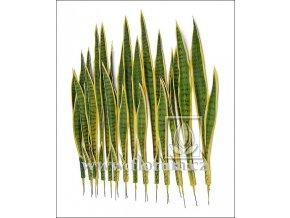Umělá rostlina Sansevieria (80cm)