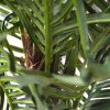 170610 paradize palm promo 100 pp close up 2