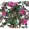 Bouganvillea Fuchsia