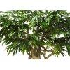 Longifolia Mini Nidra 320 cm Green V1089014b