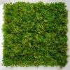 Lichene Iceland UVR Mat 50x50 Dark Green 5588DKG a