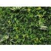 Vegetatie fijn gevarieerd Plantenwand detail