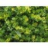 Vegetatie varen lineos kruid detail1