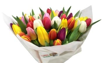 Tulipány nejsou pro každého