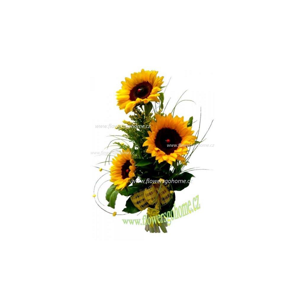 Slunečnice Jarní záře