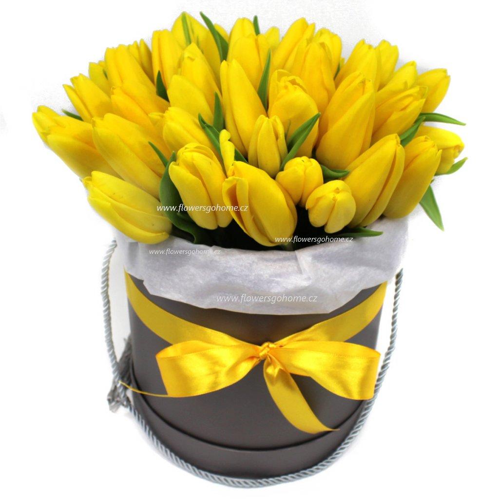 Žluté tulipány box