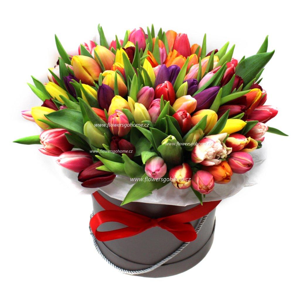 101 tulipanu