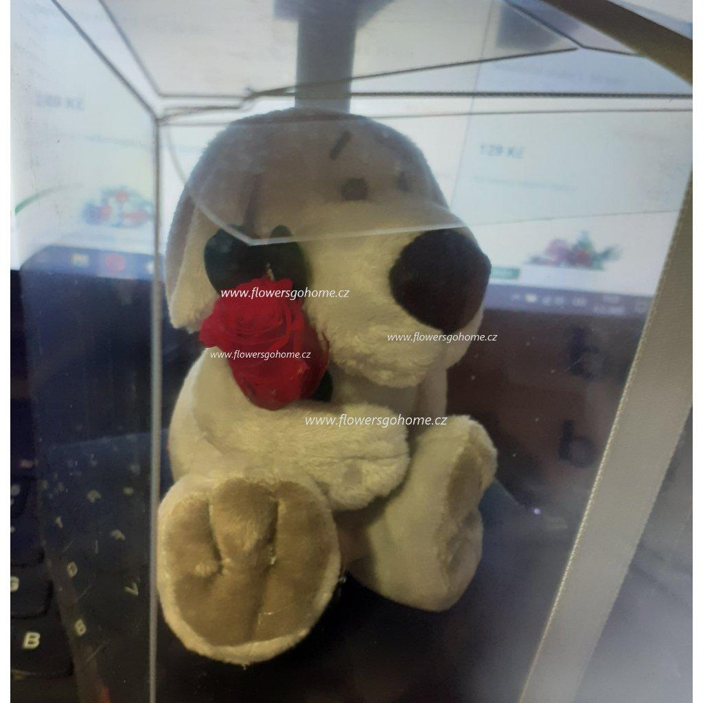 Stabilizovaná růže plyšový pejsek