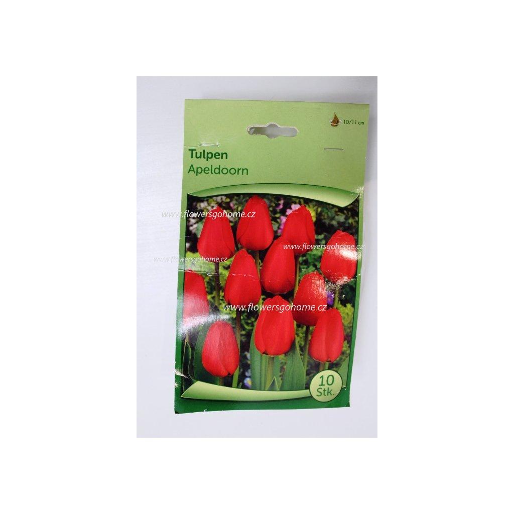 Cibule tulipánů Praha