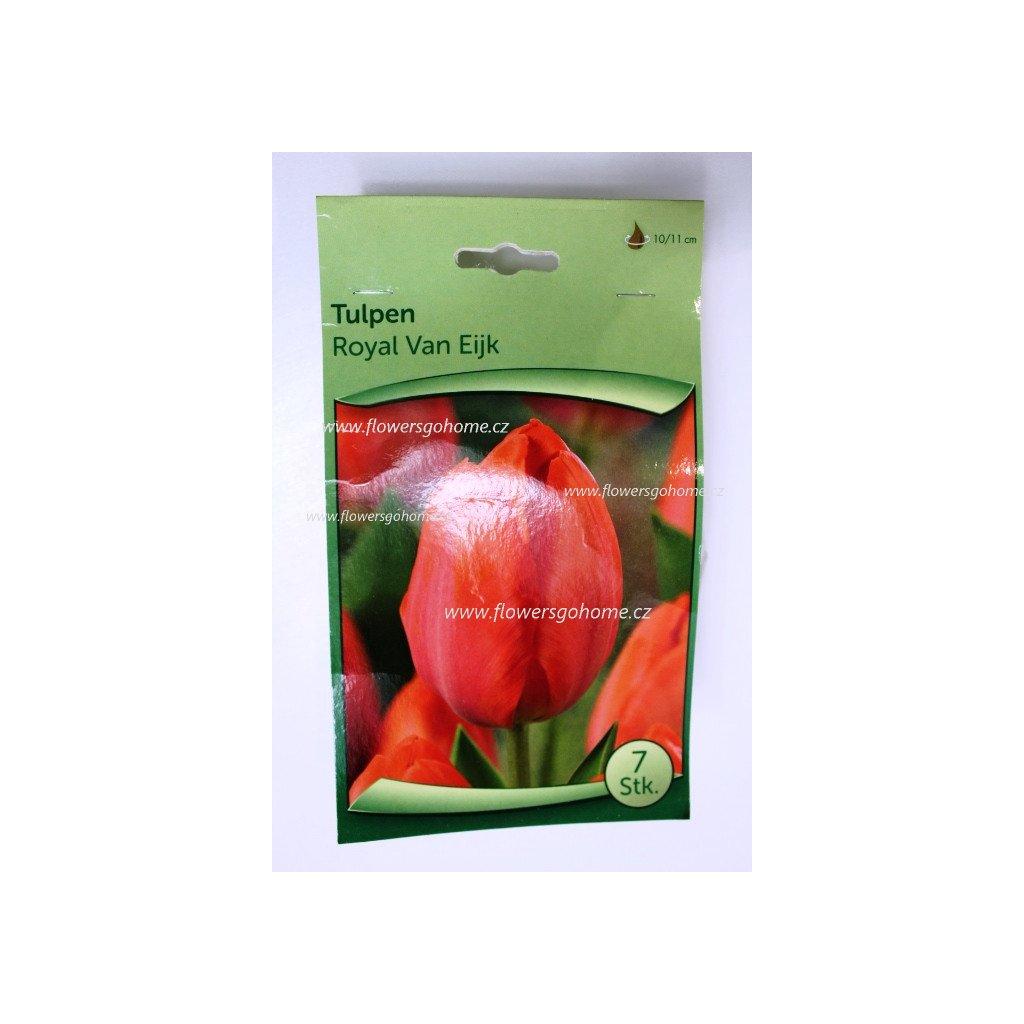 Tulipány Royale Van Eijk