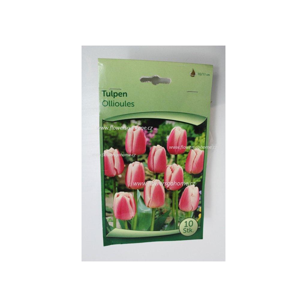 Tulipány do záhonu