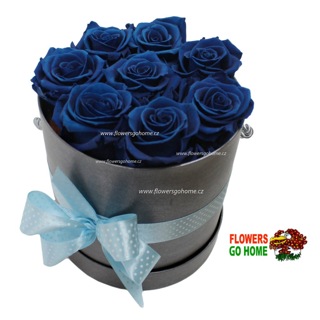 Stabilizvaná růže modrá