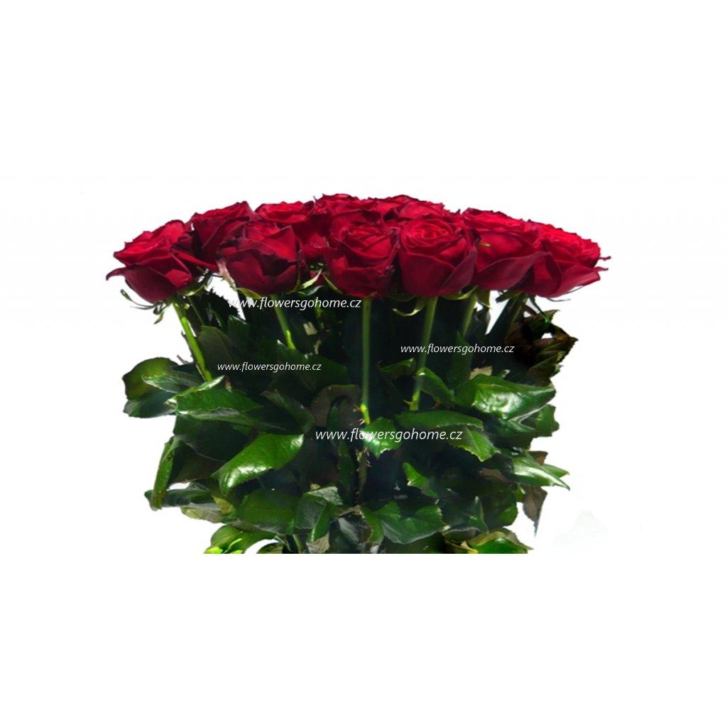 Červené růže cena