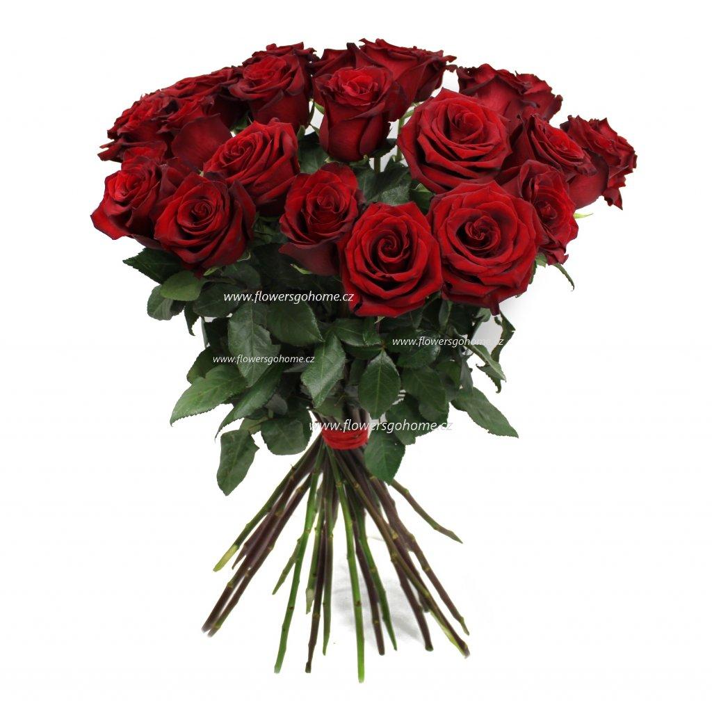 červené růže ekvádor
