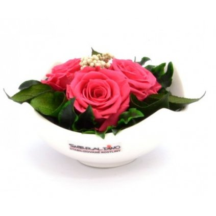 Stabilizovaná růže
