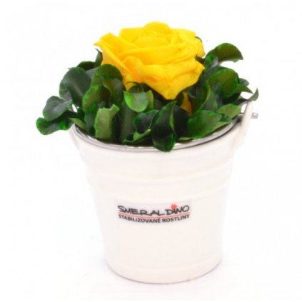 Stabilizovaná růže IDA