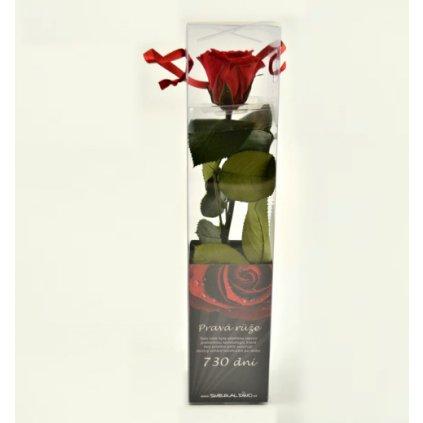 Stabilizovaná růže MINI