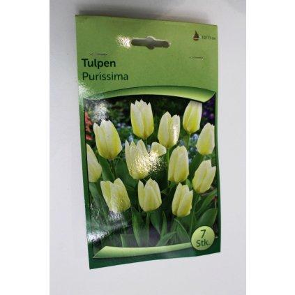 Cibule tulipánů
