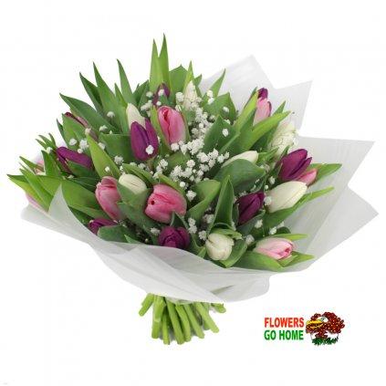 Tulipány Praha