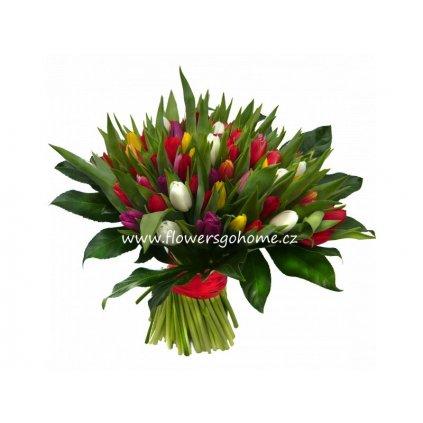 100 tulipánů