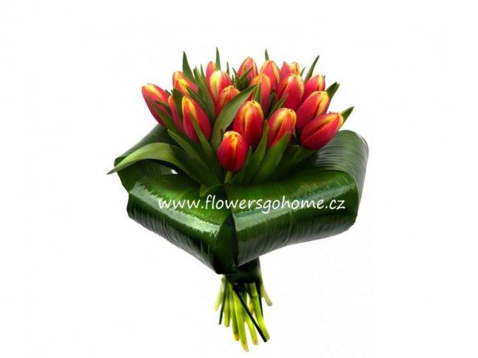 Tulipány červenožluté - žezlo