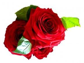 Rudé růže