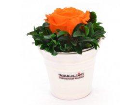 Stabilizovaná růže oranžová
