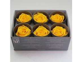Stabilizovaná růže STANDARD