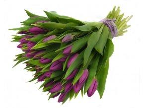 Fialové tulipány