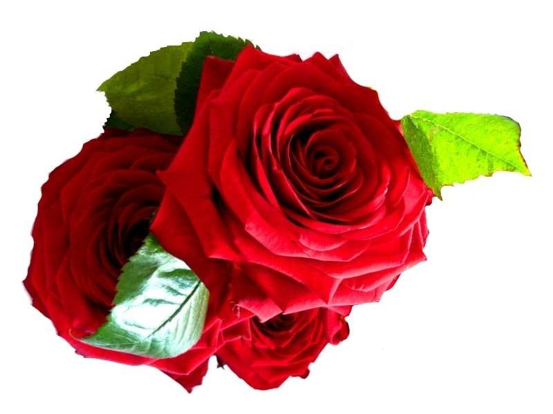 Červené růže Velikost: VLASTNÍ POČET 7 - 29ks