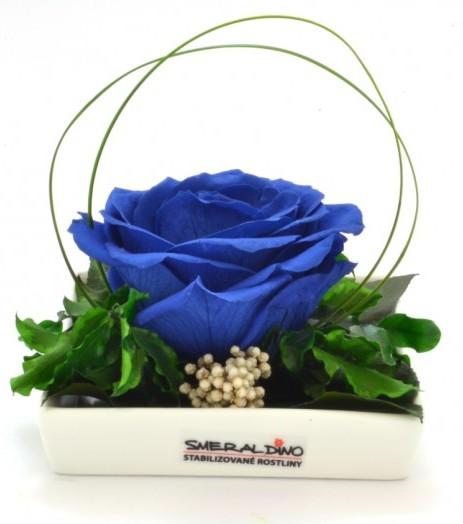 Dekorace stabilizovaná růže Barva: Royale blue