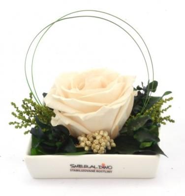 Dekorace stabilizovaná růže Barva: Champagne